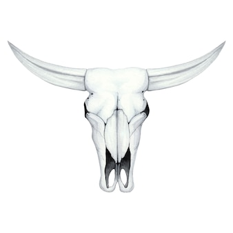 Ilustração em aquarela com uma caveira de búfalo
