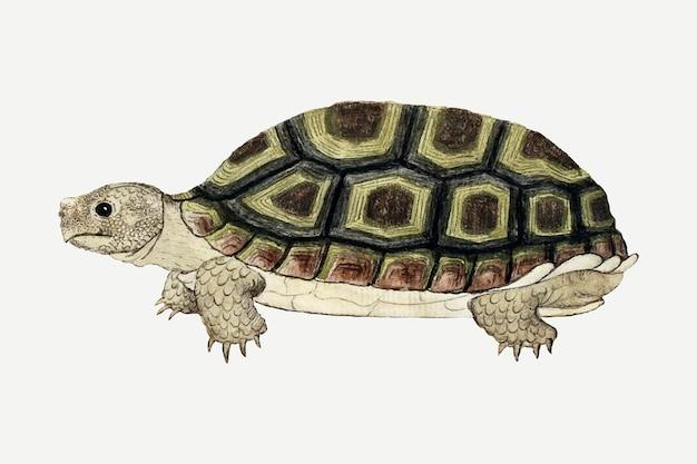 Ilustração em aquarela de animal antigo vetorial de tartaruga, remixada das obras de arte de robert jacob gordon