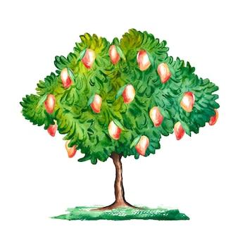 Ilustração em aquarela de mangueira Vetor Premium