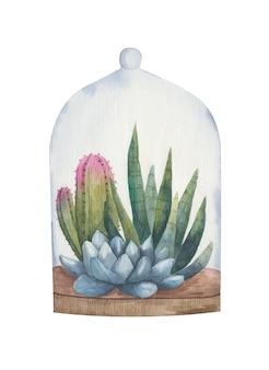 Ilustração em aquarela de plantas suculentas