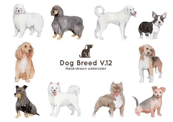 Ilustração em aquarela de raça de cão