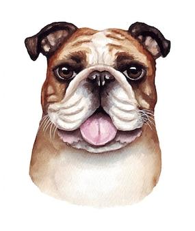 Ilustração em aquarela de um cachorro engraçado. raça de cachorro popular. cachorro. bulldog inglês. personagem feito à mão, isolado no branco