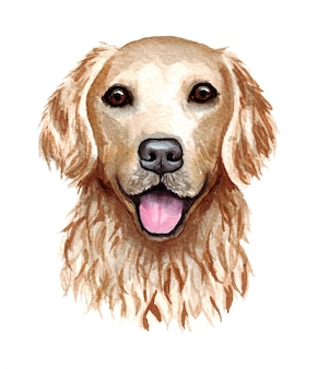 Ilustração em aquarela de um cachorro engraçado. raça de cachorro popular. cachorro. retriever dourado. personagem feito à mão, isolado no branco