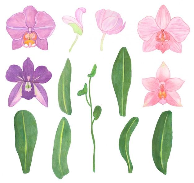 Ilustração em aquarela, flores e folhas de orquídeas, conjunto de elementos de design floral