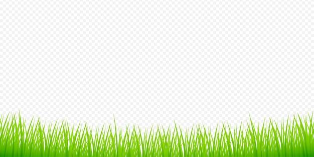 Ilustração em aquarela verde