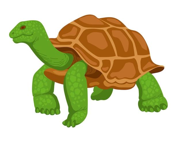 Ilustração em vetor animal selvagem réptil tartaruga gigante isolada no fundo branco