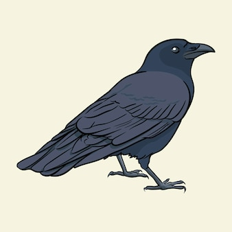 Ilustração em vetor black raven hand desenhada isolada no fundo