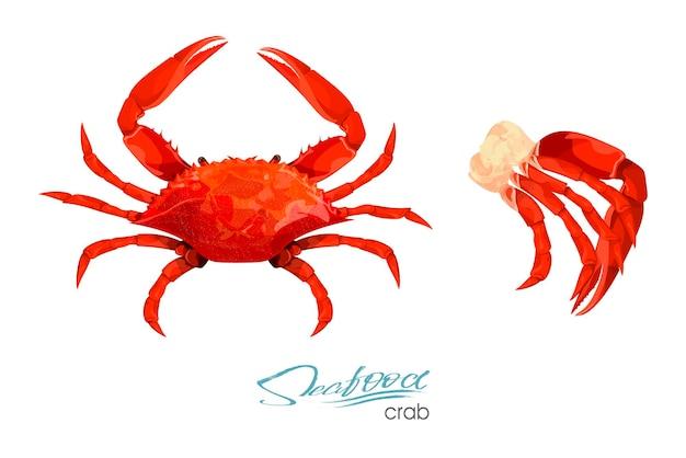Ilustração em vetor caranguejo e carne de caranguejo em estilo cartoon, isolado no fundo branco