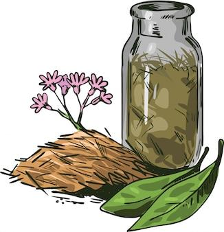 Ilustração em vetor casca de cinchona. flores desabrochando e folhas verdes
