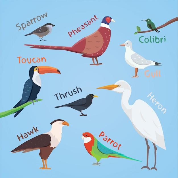 Ilustração em vetor colorido conjunto pássaro dos desenhos animados.
