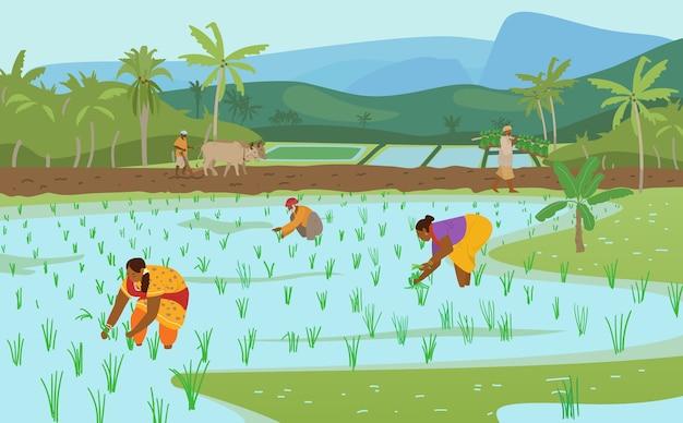 Ilustração em vetor de campos de arroz indiano com trabalhadores