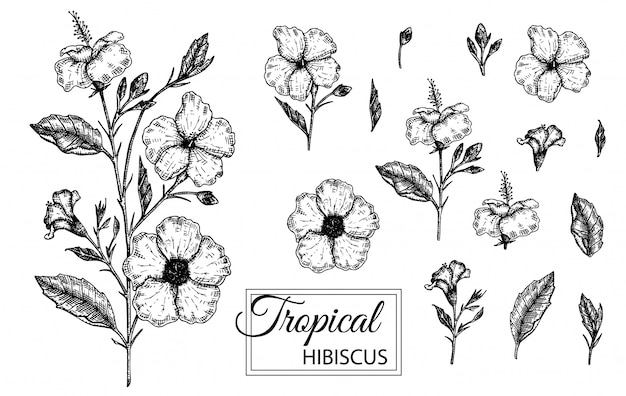 Ilustração em vetor de flor tropical isolada. mão desenhada hibisco. ilustração em preto e branco gráfica floral. elementos de design tropical estilo de sombreamento de linha