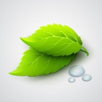 Ilustração em vetor de folhas verdes e gotas de orvalho