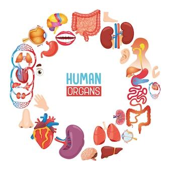 Ilustração em vetor de órgãos humanos