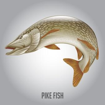 Ilustração em vetor de peixe pike