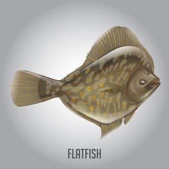 Ilustração em vetor de peixes chatos