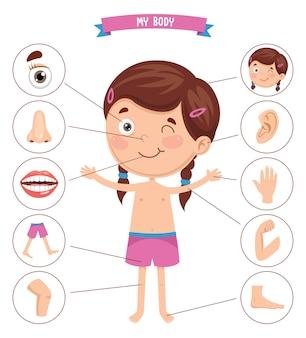 Ilustração em vetor do corpo humano