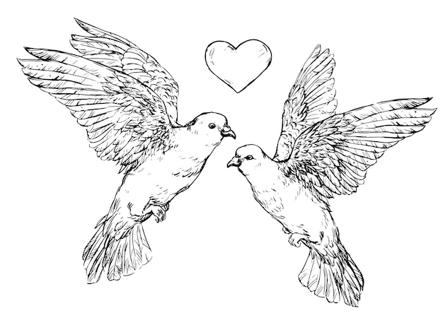 Ilustração em vetor duas pombas com coração. mão realista. esboço desenhado de um par de pombas