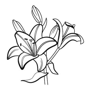 Ilustração em vetor flor lírio