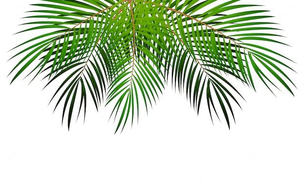 Ilustração em vetor folha de palmeira
