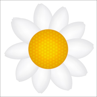 Ilustração em vetor ícone linda margarida