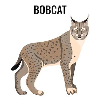 Ilustração em vetor lince manchado de comprimento total isolada. espécie de gato selvagem com pelagem nas cores cinza e branco e orelhas pontudas