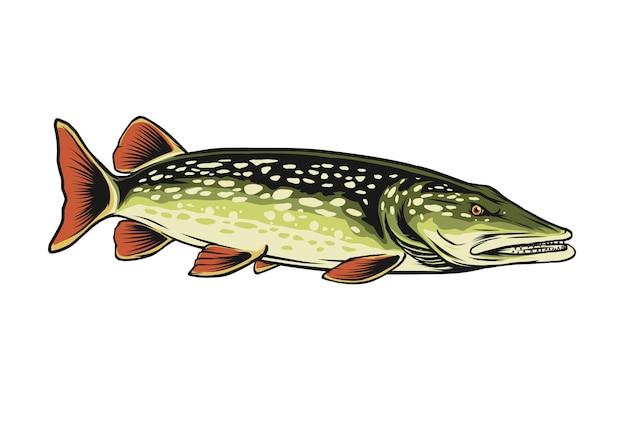 Ilustração em vetor peixe lúcio do norte
