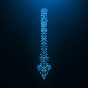 Ilustração em vetor poligonal de uma coluna vertebral humana saudável. anatomia da coluna.