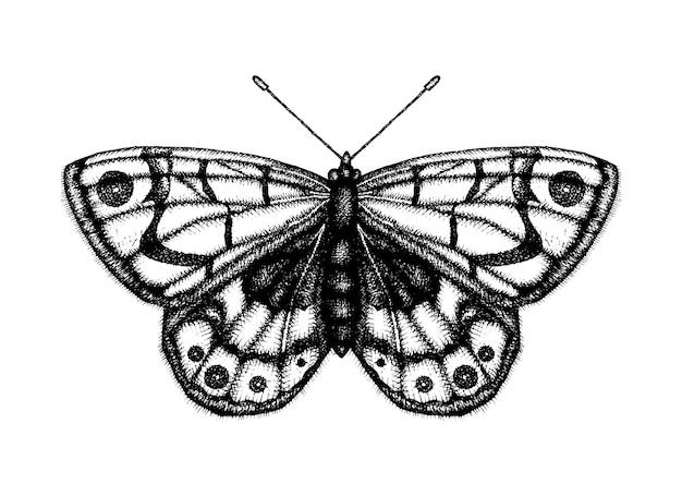 Ilustração em vetor preto e branco de uma borboleta. esboço de inseto desenhado de mão. desenho gráfico detalhado da parede marrom em estilo vintage.