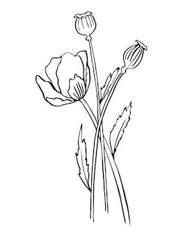 Ilustração em vetor único de uma flor de papoula. line art, doodle botany