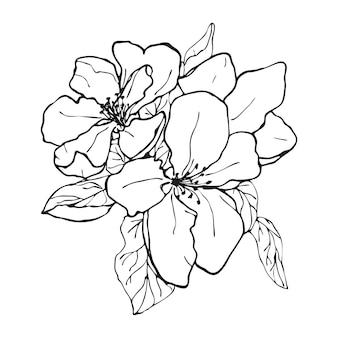 Ilustração em vetor único flores em flor de sakura ramo de macieira com flor desenhada à mão