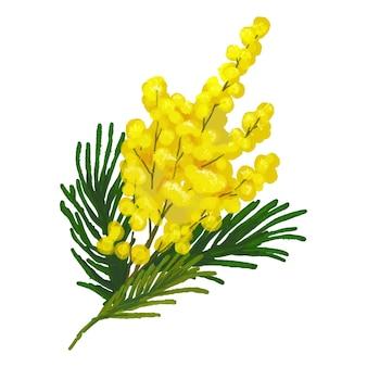 Ilustração flor mimosa galho amarelo com folhas