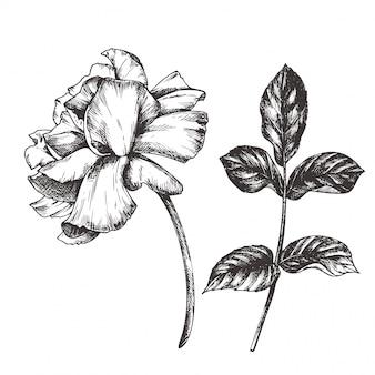 Ilustração floral vintage, gravura a mão desenhada clip-art.