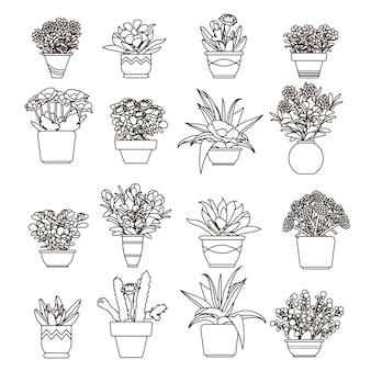 Ilustração flores e plantas, suculentas em vasos em estilo de linha.
