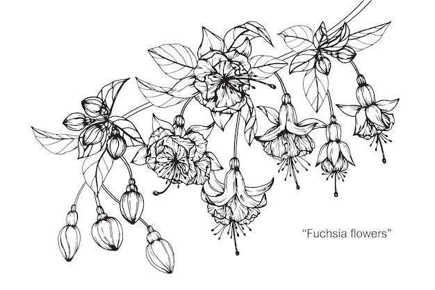 Ilustração fúcsia do desenho da flor.