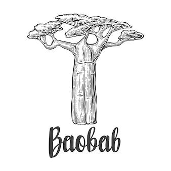 Ilustração gravada vintage de baobá árvore em branco