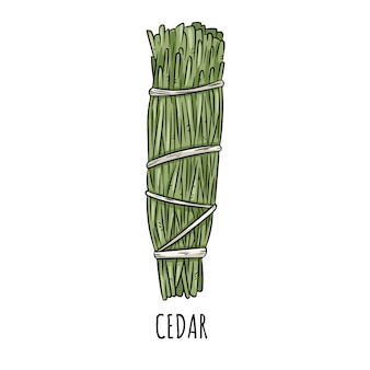Ilustração isolada da vara mão desenhada doodle prudente do borrão. pacote de ervas de cedro