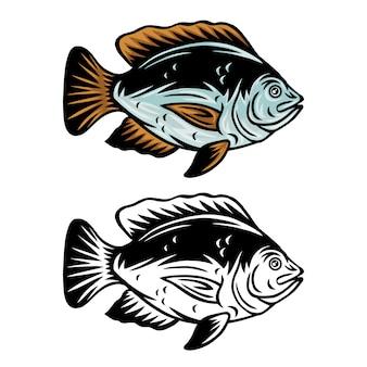 Ilustração isolada retro dos peixes do tilápia do vintage em um fundo branco.