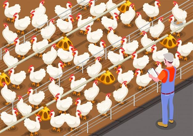 Ilustração isométrica de aves de capoeira com membro da equipe na granja controlando a alimentação de aves