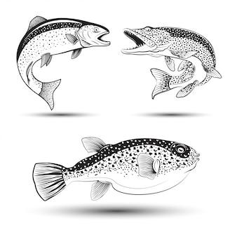 Ilustração monocromática de lúcio, truta e fugu, conjunto de peixes,