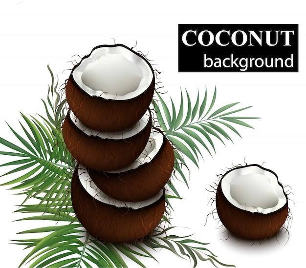 Ilustração natural de coco fresco