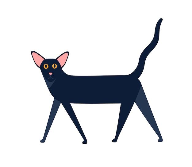 Ilustração plana do vetor da raça do gato shorthair oriental. animal mamífero preto dos desenhos animados andando isolado no fundo branco. caráter gráfico colorido doméstico preto.