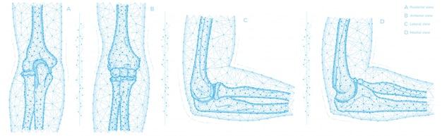 Ilustração poligonal da articulação do cotovelo humano. conceito de anatomia de ossos do braço. projeto médico abstrato baixo poli