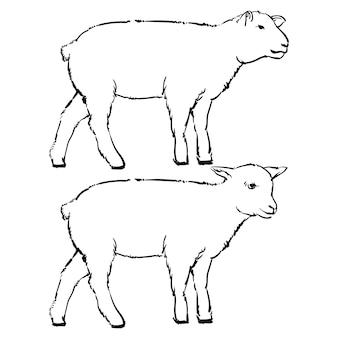 Ilustração preto e branca de gravura de cordeiro