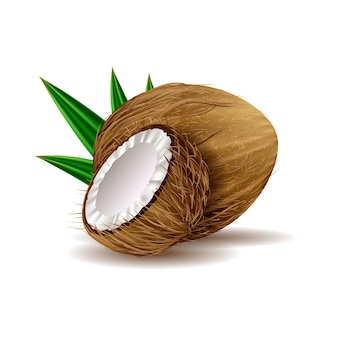 Ilustração realista de coco