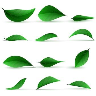 Ilustração realista de folhas de chá verde