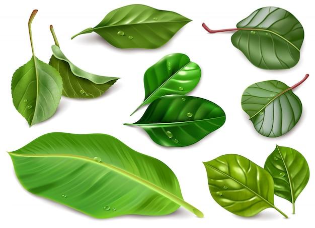 Ilustração realista de folhas de frutas com gotas de água em branco