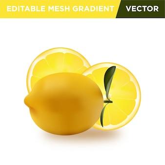 Ilustração realista de fruta limão