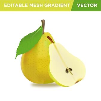 Ilustração realista de fruta pera