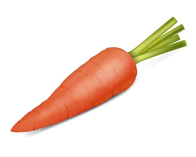 Ilustração realista de laranja cenoura Vetor Premium